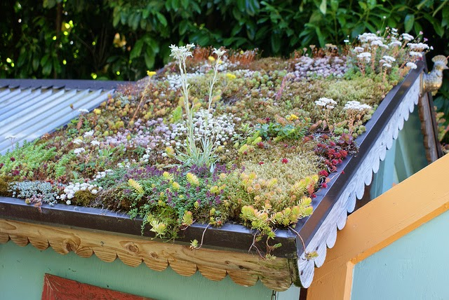 Photo Credit A Green Roof Is Sustainable