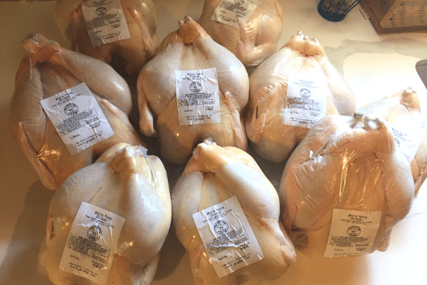 Our 1st Experience Raising Meat Chickens